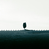 Lonely Tree and Vineyards in Tuscany Photographic Print by Nico De Pasquale Photography
