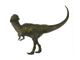Stegoceras Was a Herbivorous Dinosaur That Lived During the Cretaceous Period Poster