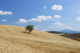 Tree in Wheat Field with Fluffy Clouds, Summer. Photographic Print by Martin Ruegner