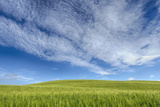 Green Wheat Field with Dramatic Sky. Photographic Print by Martin Ruegner