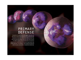 3D Illustration of Hematopoiesis of White Blood Cells Posters