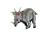 Styracosaurus Dinosaur Posters