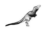 Black Ink Drawing of Daspletosaurus Torosus Art