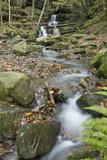 Stream near Vallombrosa Photographic Print by  Maremagnum
