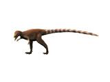 Sinosauropteryx Dinosaur Posters