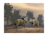 Confrontation Between Two Triceratops Prints