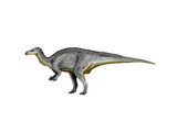 Camptosaurus Dinosaur Posters