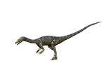 Coelophysis Dinosaur Prints