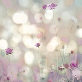 Floral Meadow I Plakat autor Kate Carrigan