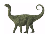A Juvenile Saltasaurus Sauropod Dinosaur of the Cretaceous Period Prints