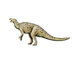 Muttaburrasaurus Dinosaur Prints