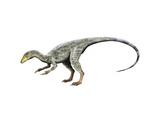 Compsognathus Dinosaur Print