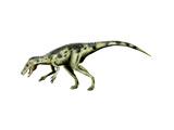 Herrerasaurus Dinosaur Posters