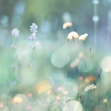 Morning Meadow I Plakaty autor Kate Carrigan