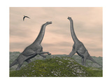Two Brachiosaurus Dinosaurs Fighting Print