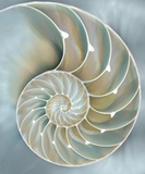 Nautilus In Blue II Poster af Caroline Kelly