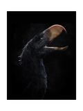 Andalgalornis Steulleti, a Flightless Predatory Bird Print
