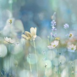 Morning Meadow II Prints by Kate Carrigan