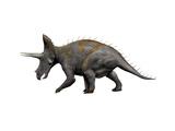 Triceratops Dinosaur Prints