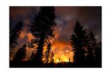Rim Fire in Yosemite, California Posters