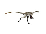 Coelurus Dinosaur Poster