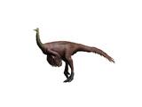 Ornithomimus Dinosaur Prints