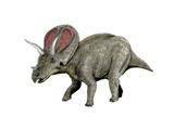 Torosaurus Dinosaur Posters