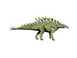 Huayangosaurus Dinosaur Posters