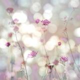 Floral Meadow II Kunstdrucke von Kate Carrigan