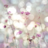 Floral Meadow II Prints by Kate Carrigan