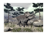 Zuniceratops Dinosaur Walking on a Hill with Large Rocks and Pine Trees Art