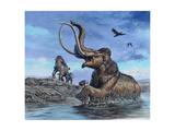 Columbian Mammoth Trapped by Asphalt at La Brea Tar Pits, California Prints