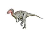 Neovenator Dinosaur Print