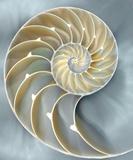 Nautilus In Blue I Plakater af Caroline Kelly