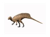 Heterodontosaurus Dinosaur Prints