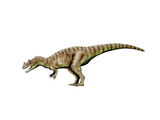 Ceratosaurus Dinosaur Posters