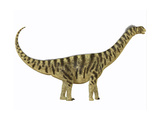 Camarasaurus Was a Sauropod Dinosaur That Lived During the Jurassic Age Prints