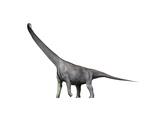 Mamenchisaurus Dinosaur Poster