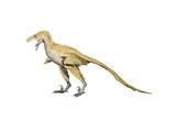Bambiraptor Dinosaur Posters