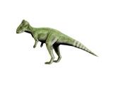 Graciliceratops Dinosaur Prints