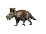 Pachyrhinosaurus Dinosaur Posters