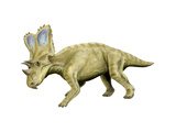 Chasmosaurus Dinosaur Posters