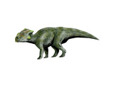 Bagaceratops Dinosaur Prints