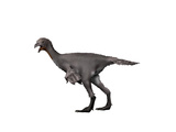 Avimimus Dinosaur Posters