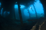 Diver Exploring the Liberty Wreck, Tulamben, Bali, Indonesia Photographic Print