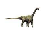 Camarasaurus Dinosaur Print