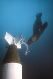 A California Sea Lion Attaches a Device onto a Mock Asroc Missile Underwater Photographic Print