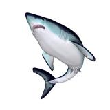 Mako Shark Print