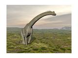 Brachiosaurus Dinosaur Walking in Grassy Landscape Posters
