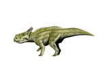 Montanoceratops Dinosaur Prints